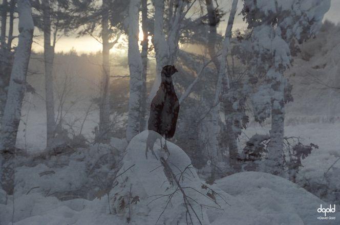http://dgoldphoto.com/images/Winter%20Scene%20-%20Gold%20Forest%20-5.jpg